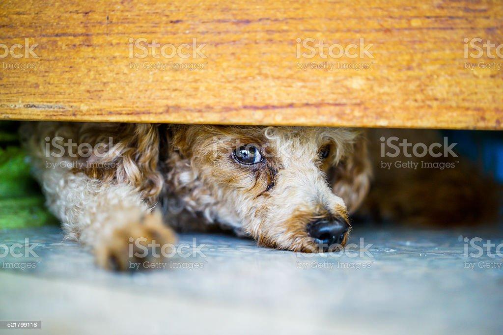 puddle dog stock photo