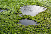 puddle in the grass with reflection