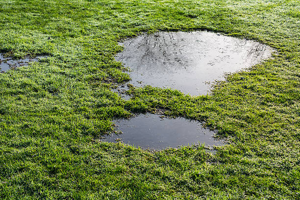 puddle in the grass stock photo