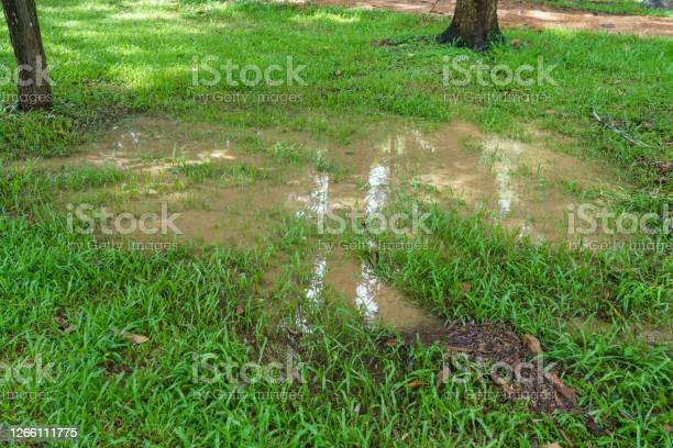 Photo of A puddle in the lawn