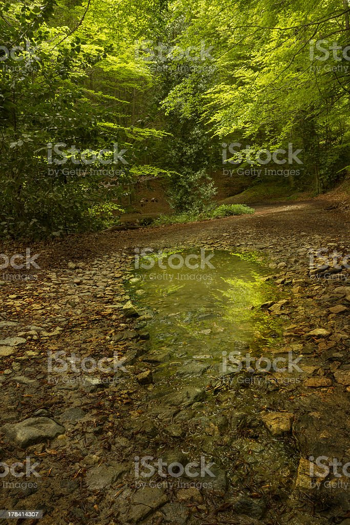 Puddle of water with green forest stock photo