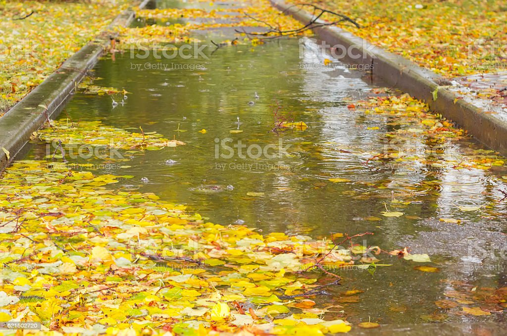 Puddle with fallen leaves on the park track during rain foto stock royalty-free