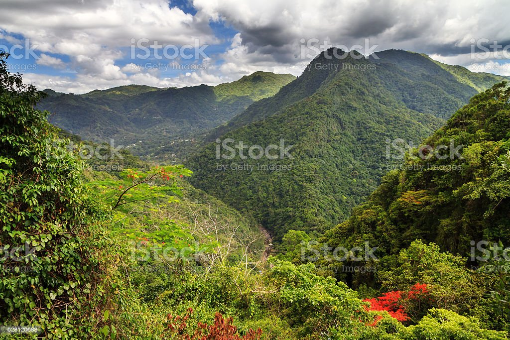 Puerto Rico forest hills stock photo