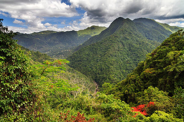 Puerto Rico forest hills – Foto
