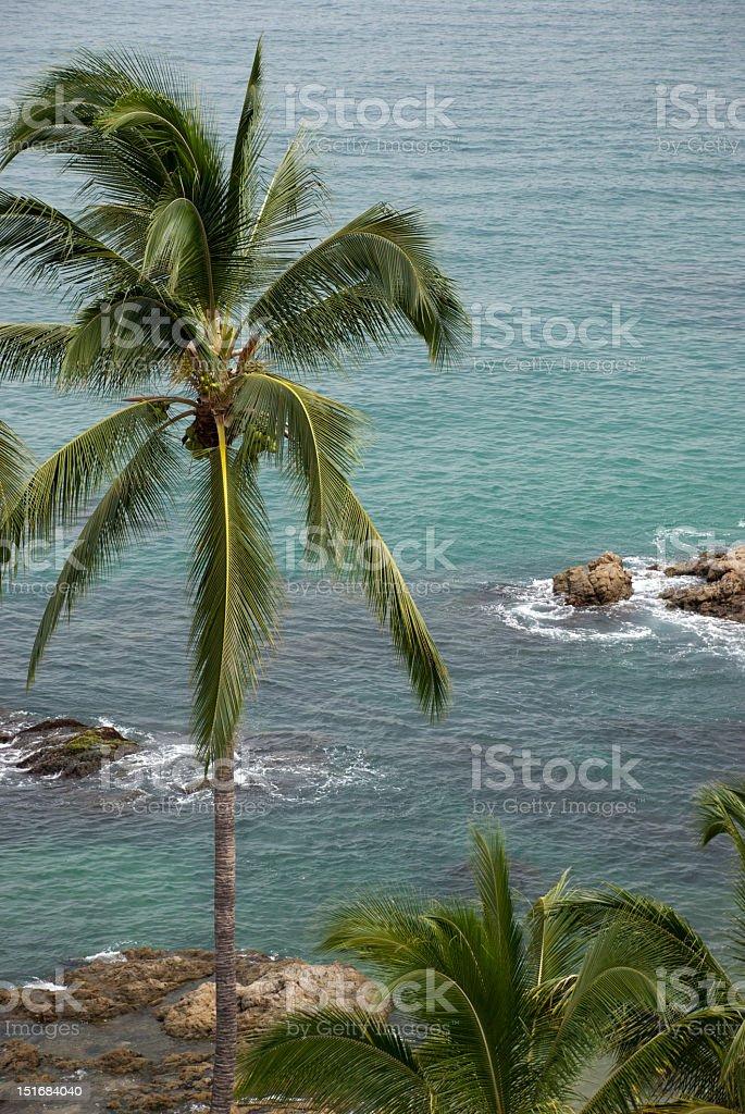 Puerto Vallarta Palms stock photo