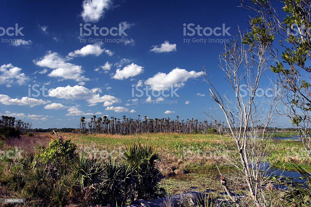 Puffy Swamp Clouds royalty-free stock photo
