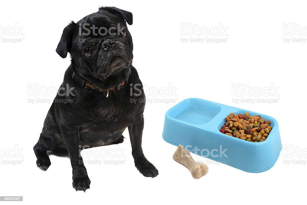 Pug and dogfood - Royalty-free Animal Stock Photo