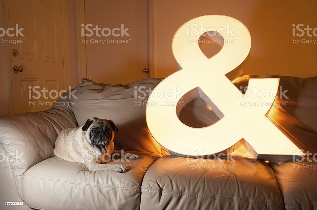 Pug and Light on Couch. stock photo