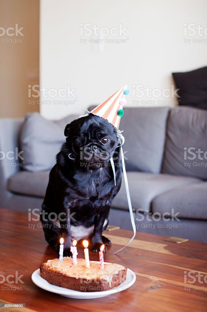 Astounding Pug Birthday Party Cake Stock Photo Download Image Now Istock Funny Birthday Cards Online Bapapcheapnameinfo