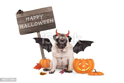istock pug dog dressed up as devil for halloween, with  funny pumpkin lantern and wooden board 862073584