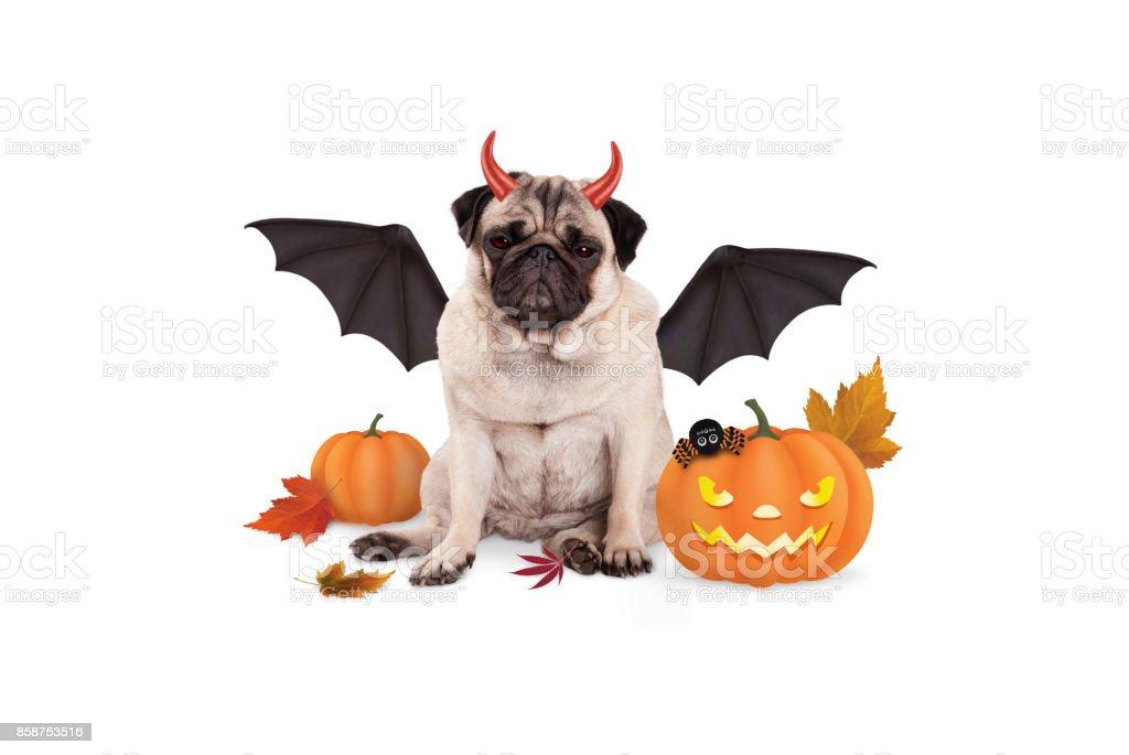 Mops Hund Verkleidet Als Teufel Für Halloween Gruselige Kürbis ...