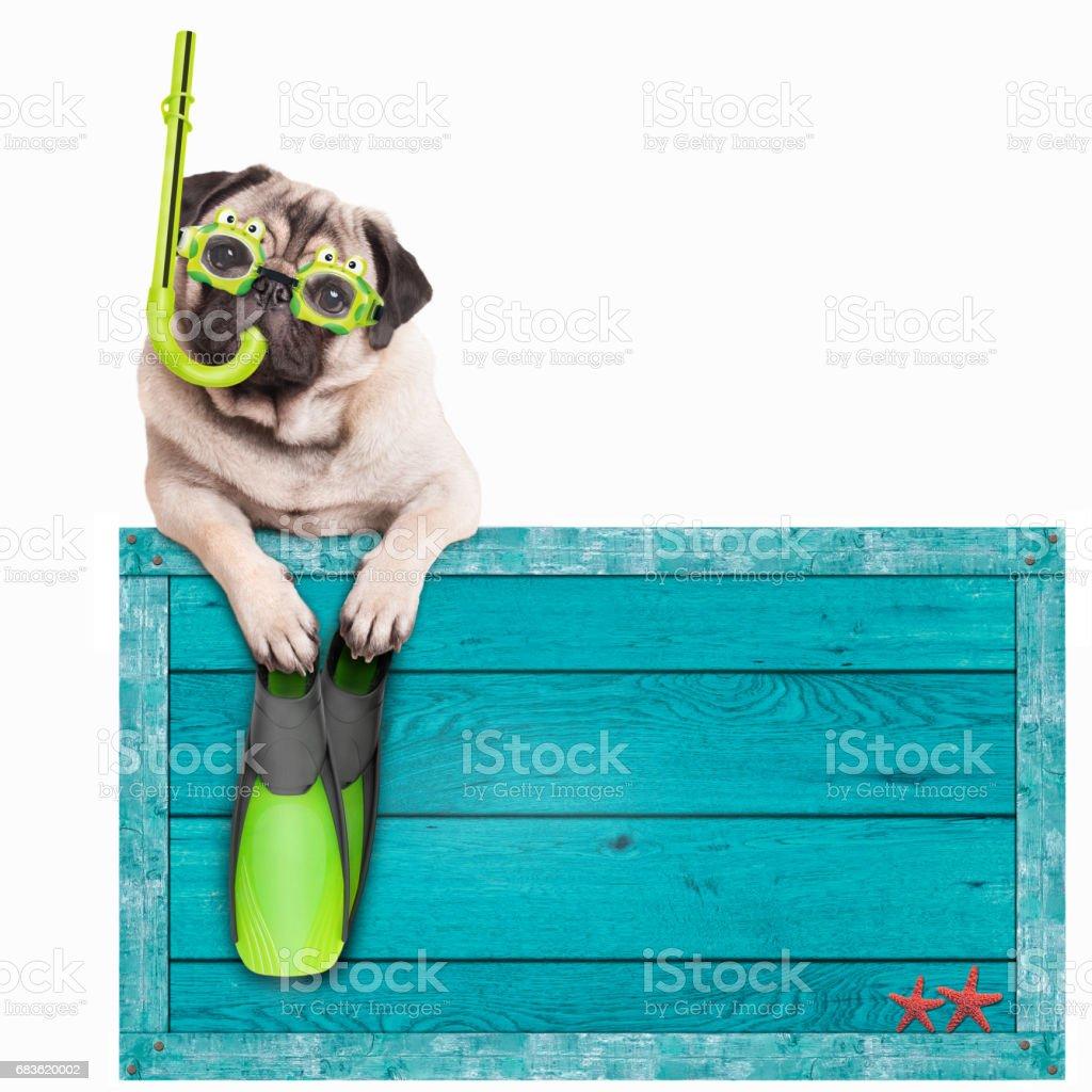 Mops Hund mit blauer Vintage Holz Strand zu unterzeichnen, mit Brille, Schnorchel und Flossen für den Sommer, isoliert auf weißem Hintergrund - Lizenzfrei Bikini Stock-Foto