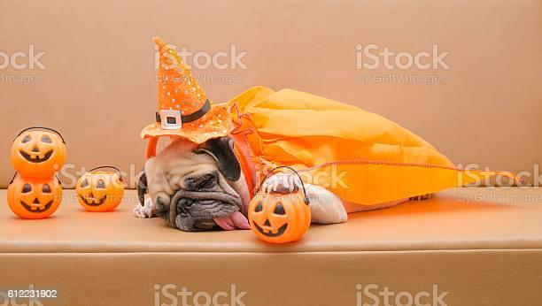 Pug dog with halloween costume sleep on sofa picture id612231902?b=1&k=6&m=612231902&s=612x612&h=kgkjp50gmmz uf8h o u4w1f 4gqfjucn9vyvejdcmq=