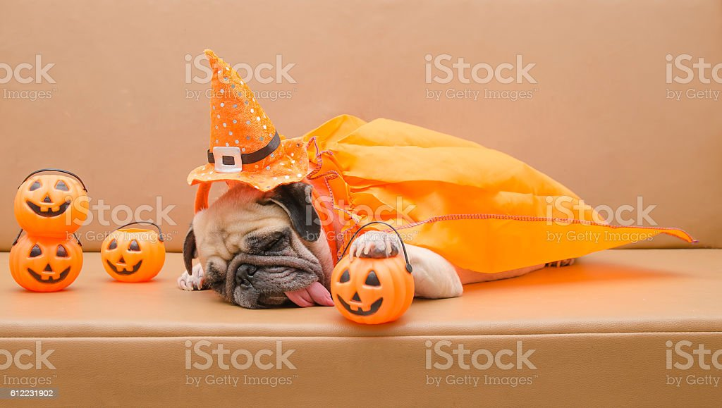 Pug dog with Halloween costume sleep on sofa stock photo