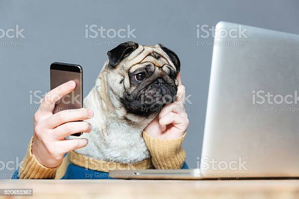 Pug dog with man hands using laptop and cell phone picture id520653362?b=1&k=6&m=520653362&s=612x612&h=imzsegzxin5qjtjno bzwuhpkzjoqyq2ddkjftlwih0=