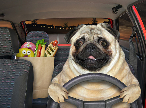 The pug dog is driving a red car on the highway at night. A paper bag with food is next to him.