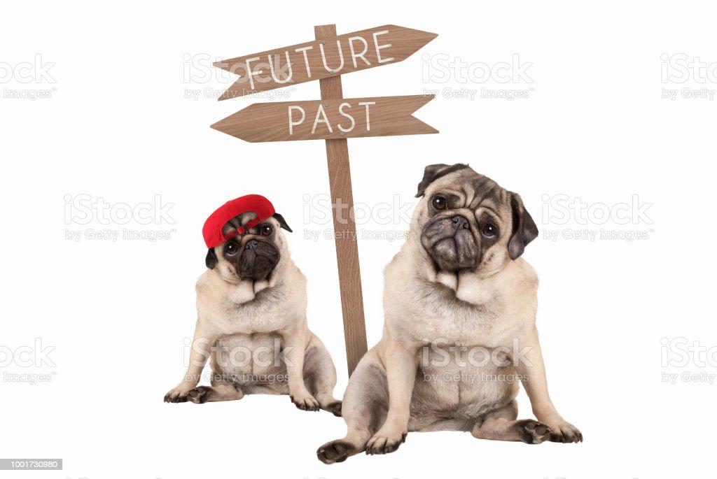 pug puppy hondje en ouder dier zat naast wegwijzer met tekst, verleden en toekomst foto