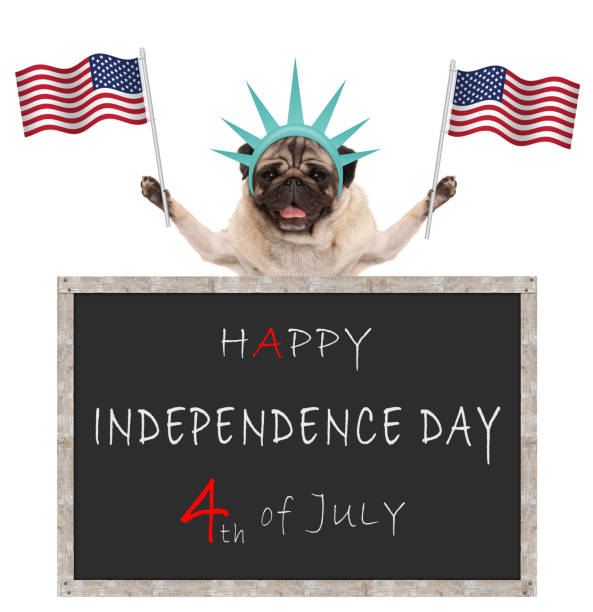 pug puppy dog with American flag and statue of liberty crown, behind blackboard with text happy 4th of July and independence day stock photo