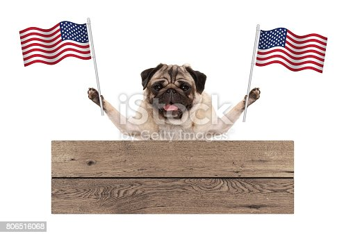 istock pug puppy dog with American National flag of USA and wooden board sign 806516068
