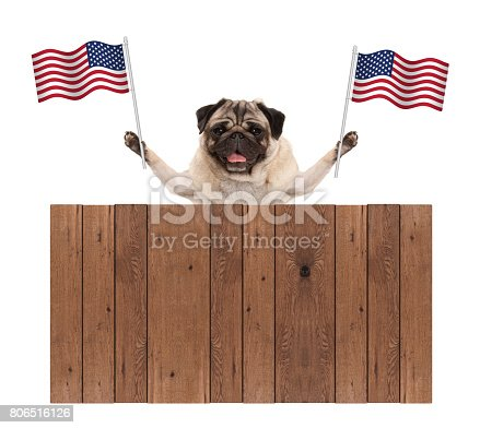 istock pug puppy dog with American National flag of USA and wooden fence 806516126