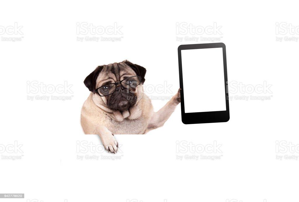 pug puppy hondje met glazen bedrijf leeg tablet of mobiele telefoon foto