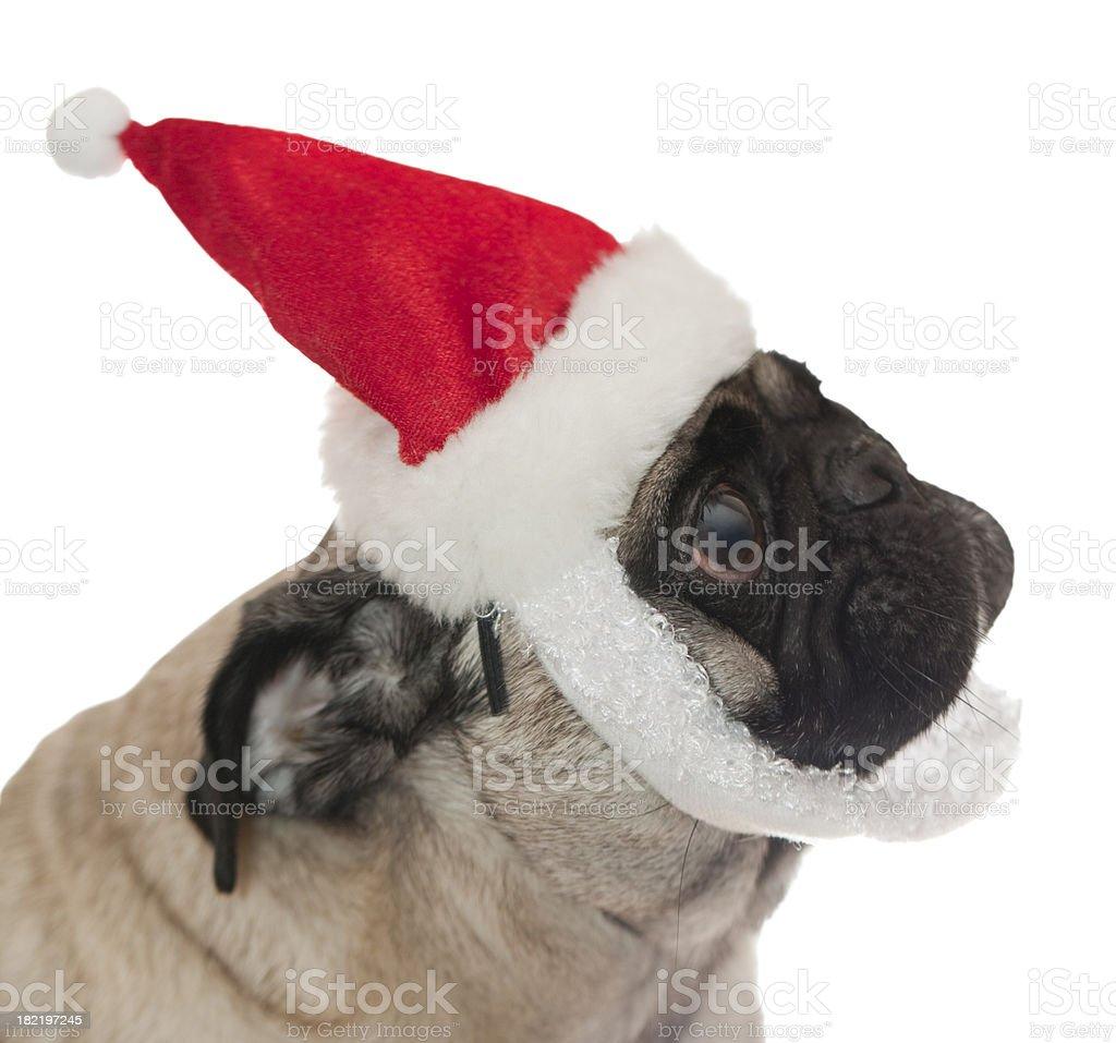 pug with santa hat royalty-free stock photo