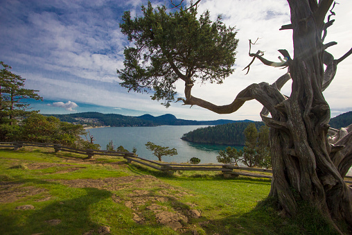 Puget Sound view framed by snag with Anacortes background horizontal