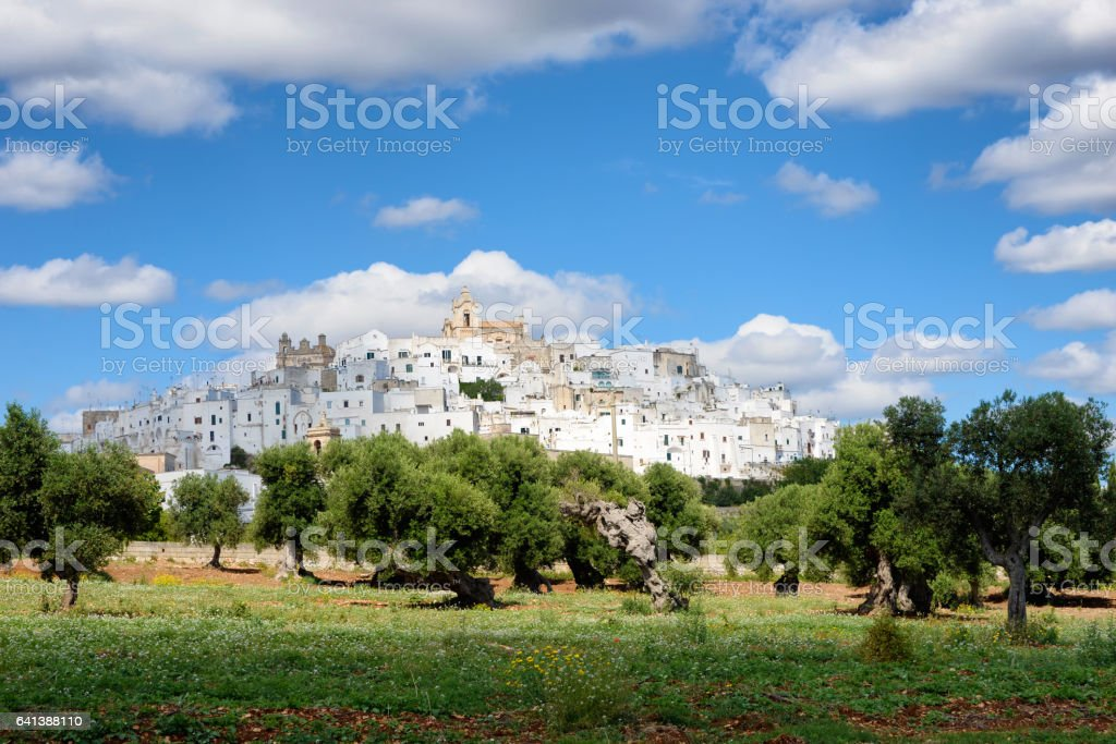 Puglia white city Ostuni with olive tree orchard stock photo