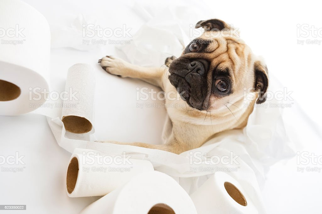 Puk Pukster Caught Playing with Rolls of Toilet Paper stock photo