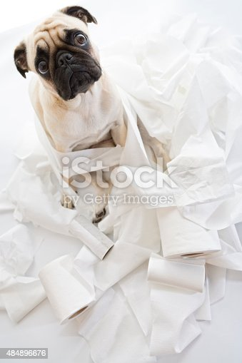 istock Puk Pukster Is in Trouble Again with Toilet Paper 484896676