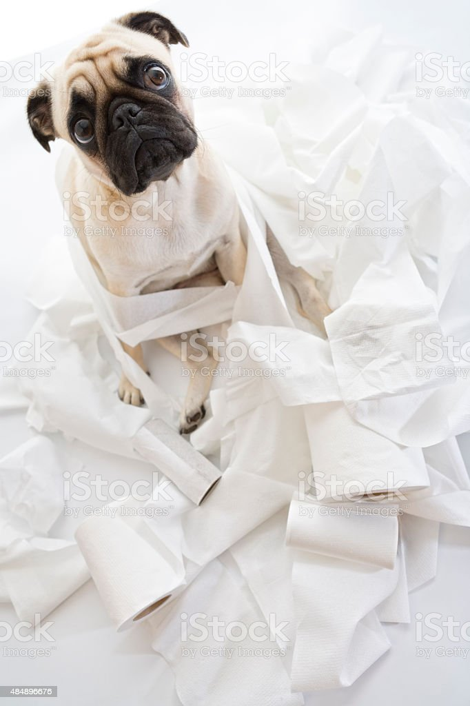 Puk Pukster Is in Trouble Again with Toilet Paper stock photo