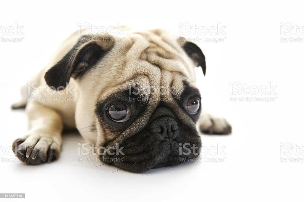 Puk Pukster stock photo