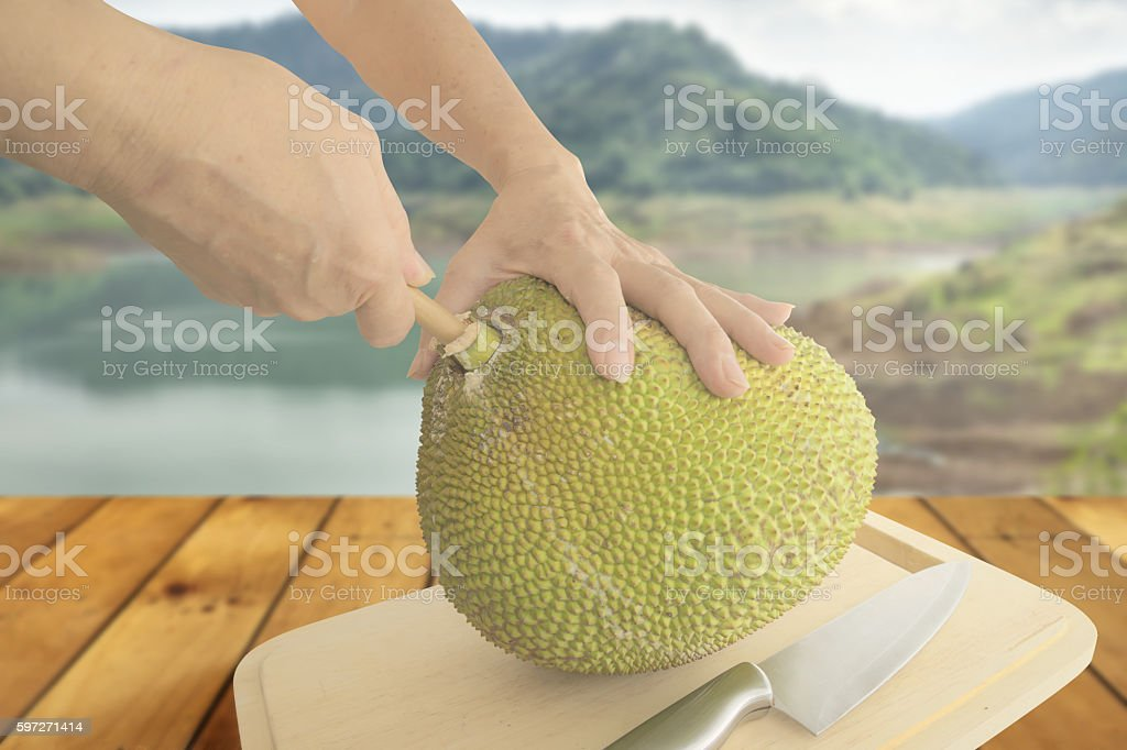 Pulling out wooden rod from Jackfruit Lizenzfreies stock-foto