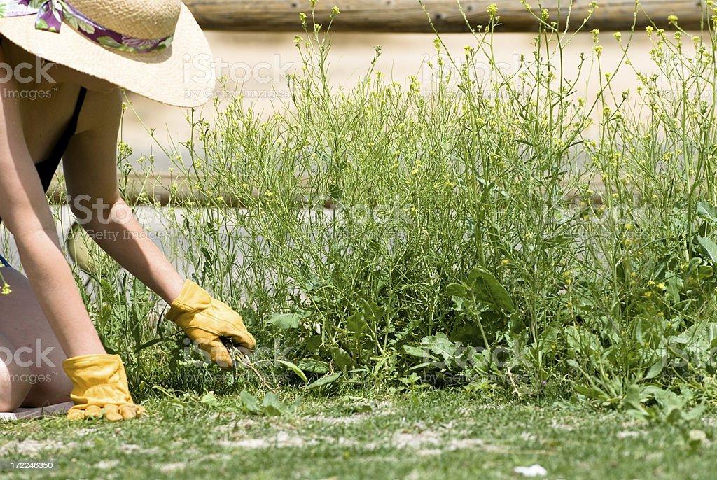 Puxando ervas daninhas - foto de acervo