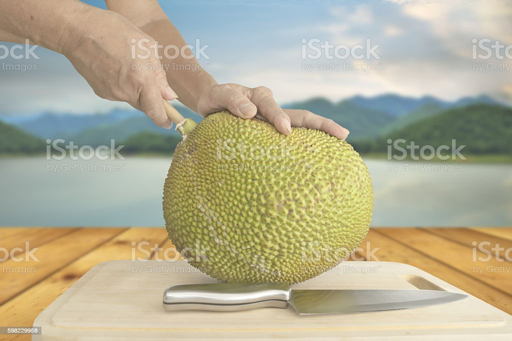 Pulling wood rod out of jack fruit foto royalty-free