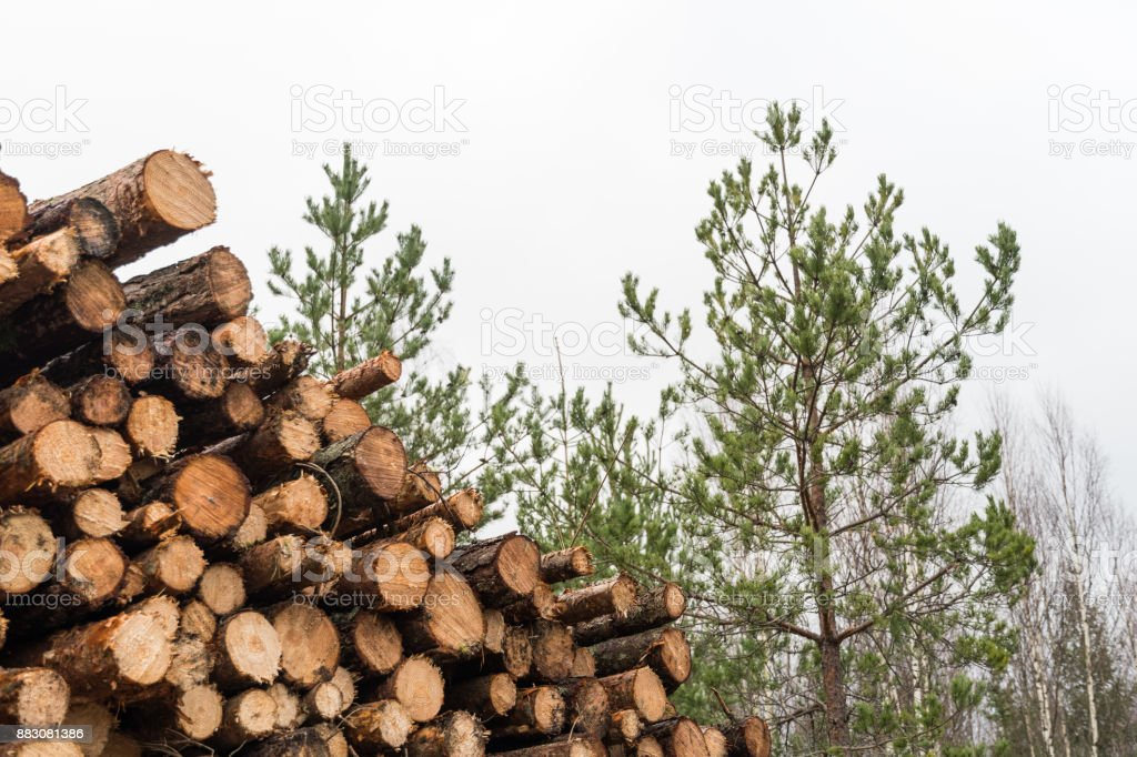 Pulpwood heap in a forest stock photo