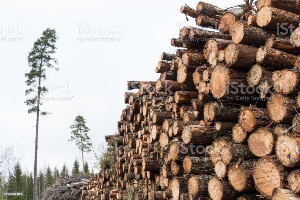 Pulpwood pile in a forest stock photo