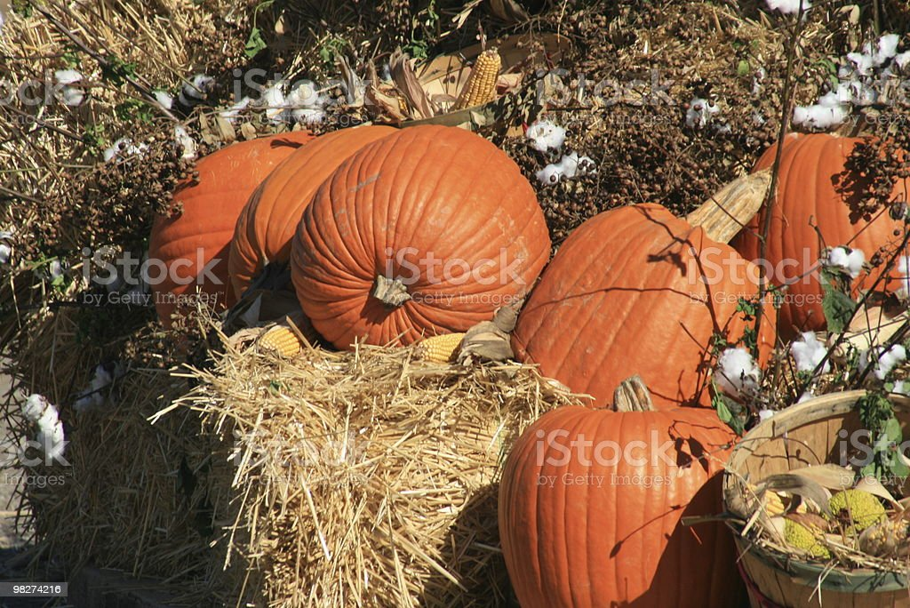 pumkin and things royalty-free stock photo