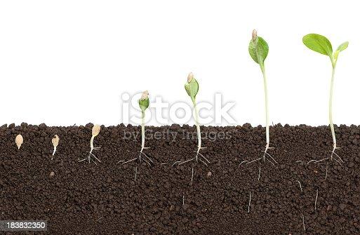 Pumkin seed come to life