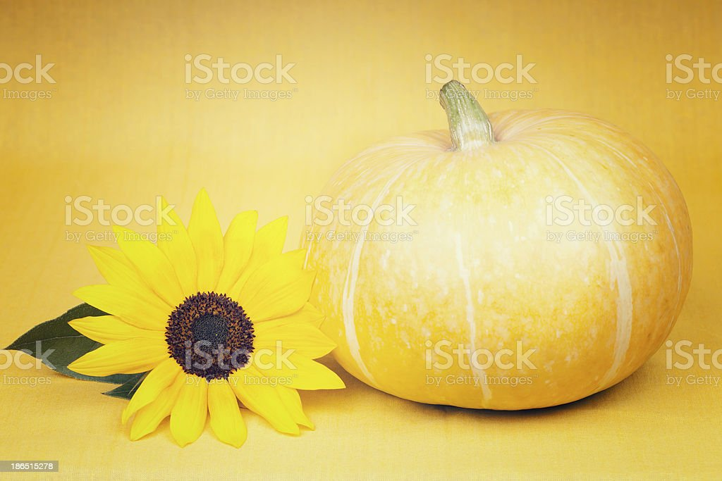 Pumkin with sunflower on yellow background royalty-free stock photo