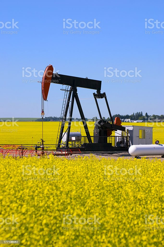 Pump Jack in a Canola Field royalty-free stock photo