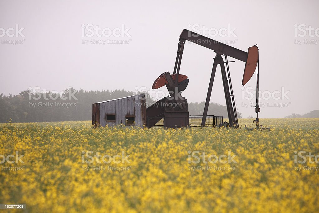 Pump Jack in Canola Field royalty-free stock photo
