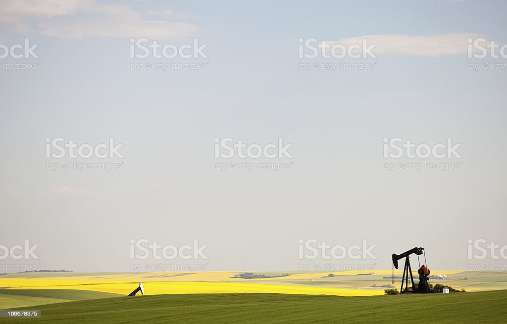 Pumpjack in Canola Field in Rural Alberta royalty-free stock photo