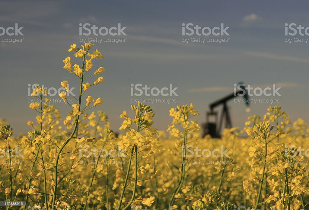 Pumpjack in Rapeseed royalty-free stock photo