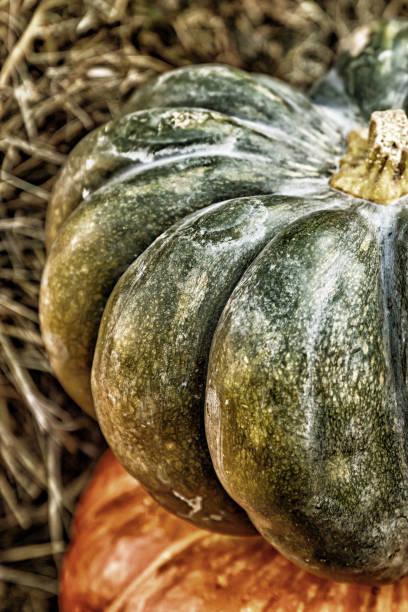 pumpkin a pair of vegetables green and orange toned closeup - pumpkin pie стоковые фото и изображения