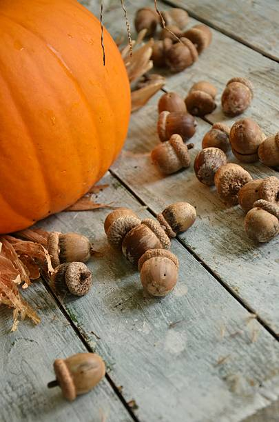 Pumpkin and Acorns stock photo
