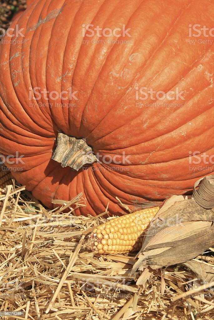 pumpkin and corn royalty-free stock photo