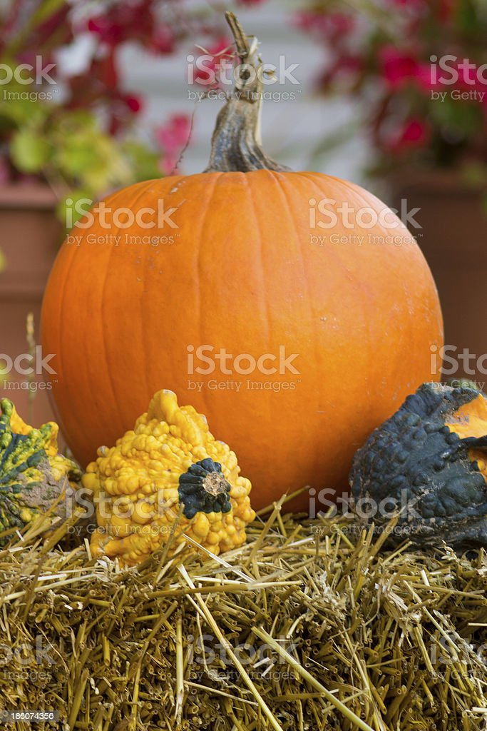 Pumpkin and Gords royalty-free stock photo