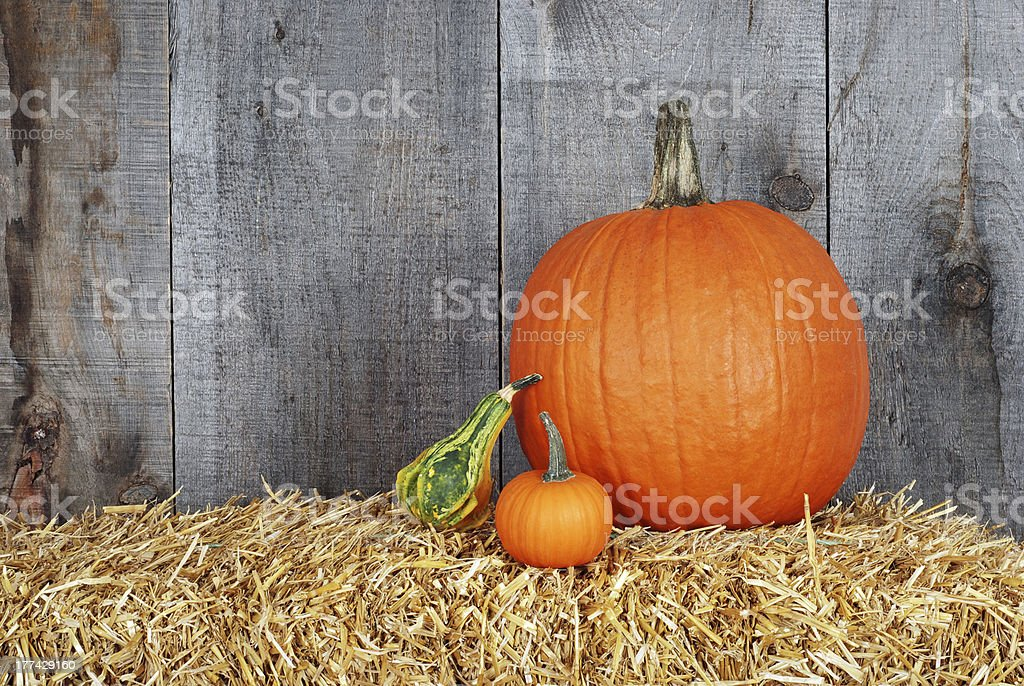 pumpkin and gourds stock photo