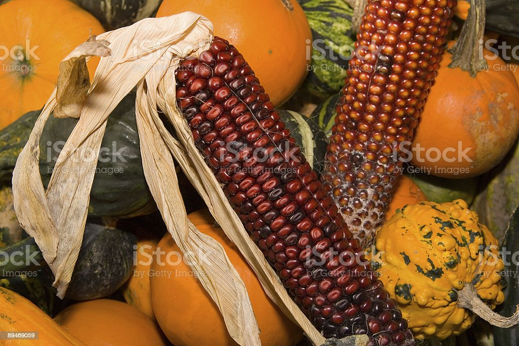 Pumpkin and maize royalty-free stock photo